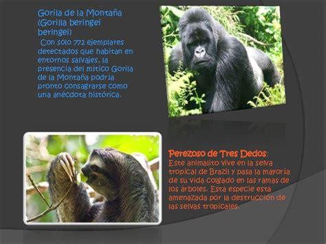 biografia de animal diapositivas de la extincion de animales