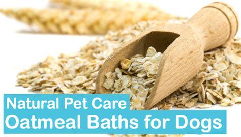 oatmeal bath for dogs oatmeal bath for dogs pet care petpa
