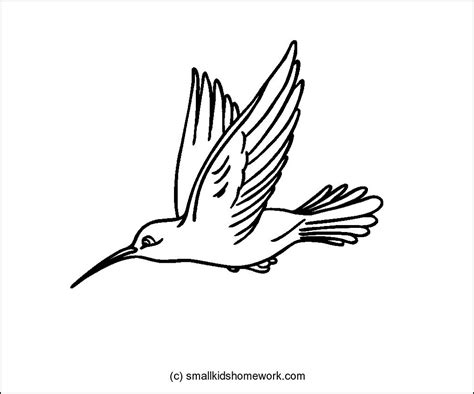 hummingbird clipart outline clipground