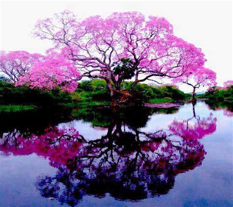 tree mobil pink tree wallpaper free mobilclub mobi