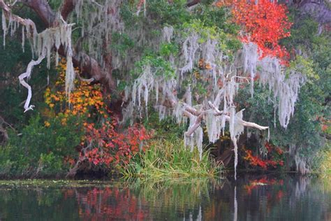 of south carolina colors 187 things to do in the lowcountry this fall the mcom