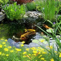 Japanische Gärten Pflanzen 926 by Algen Im Gartenteich Bek 228 Mpfen Mein Sch 246 Ner Garten