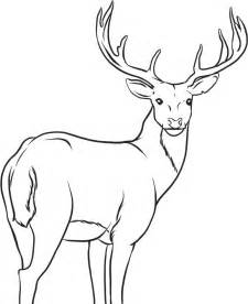How To Draw A Deer Coloring Page sketch template