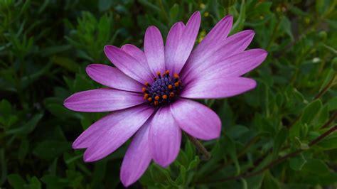 botanica fiori immagini natura fiore petalo botanica flora