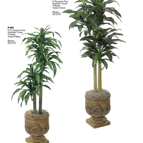 artificial sunlight l for plants house plants low light in deluxe six houseplants find