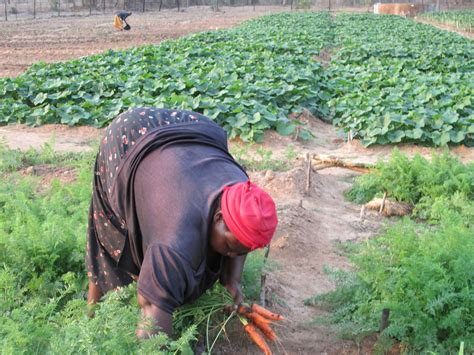 subsistence farming a no fluff guide to feeding your family with