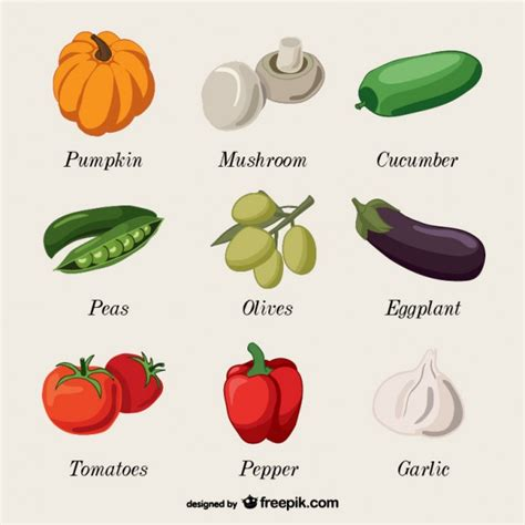 3 vegetables name vegetables name collection vector free