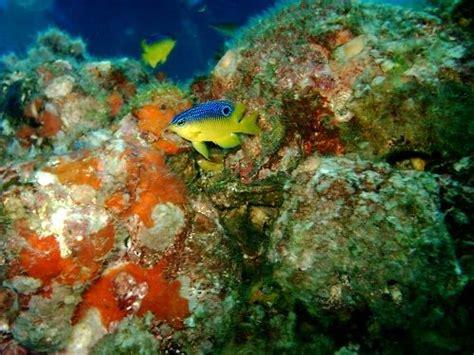 Flower Garden Reef Flower Garden Banks Diving