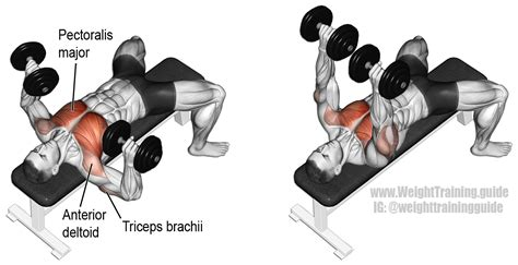 bench press work out dumbbell bench press exercise guide and video weight training guide