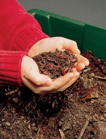 best compost worms best 20 wiggler worms ideas on worm
