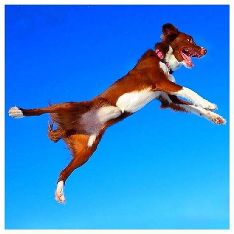high energy dogs 7 tips for harnessing the high energy leaps n hounds