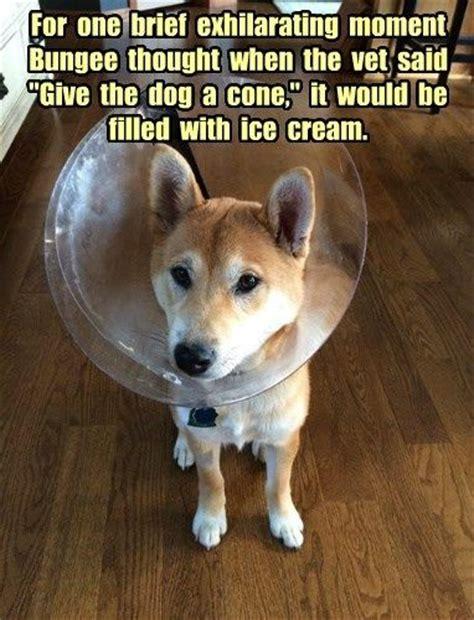 Dog Vet Meme - 17 best images about veterinary humor on pinterest cats