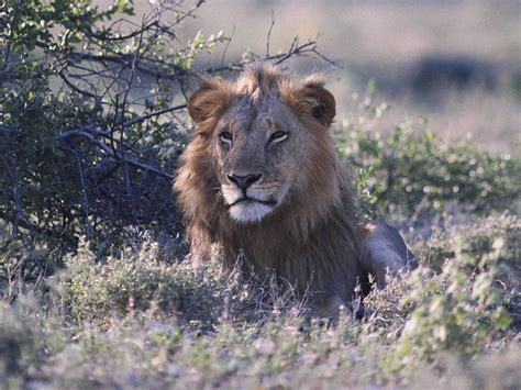 wild animals of the funnnnnnny walpaperz beautiful wild animals wallpapers