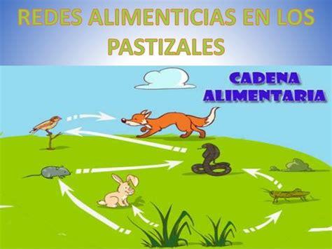 dibujos de la cadena alimenticia del paztisal brainly lat - Cadenas Alimenticias Fáciles Para Dibujar