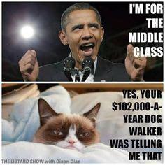 Obama Dog Meme - grumpy cat on pinterest funny grumpy cats grumpy cat