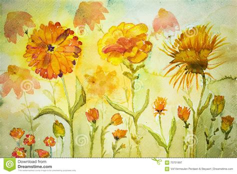 marigold paint marigold watercolor painting marigolds and buds stock