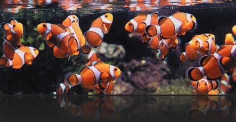 aquarium adventure    areas  peaceful places