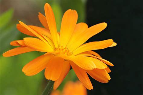 farbe orange wirkung und bedeutung der farbe orange