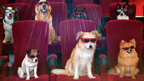 house for dogs movie top 16 movies for dog lovers poll rover com