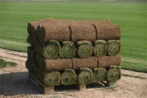 tappeto erboso a rotoli prato a rotoli pratosubito produzione di prato in zolle