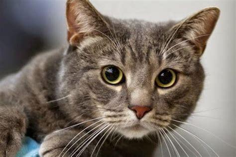 imagenes surrealistas de gatos razas de mininos de casa imagenes de gatitos con frases