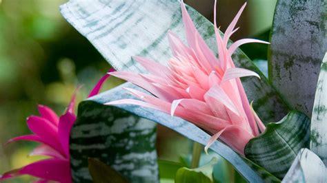 easy houseplants easy  care  indoor plants