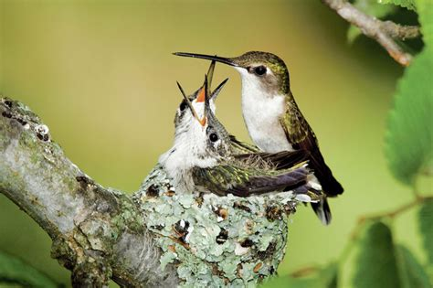 hummingbirds return to santa fe the santa fe new mexican