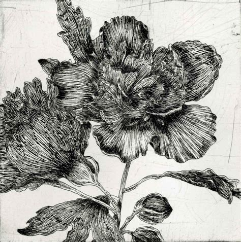 etchings jessie wu