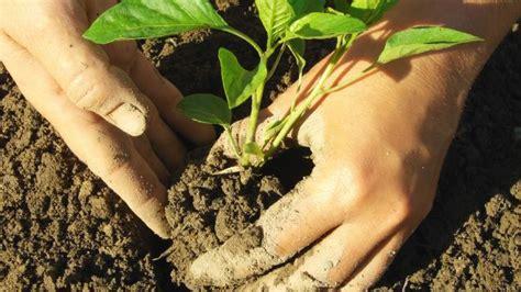 alimentazione basica ricette come proteggere il terreno giardino rendendolo fertile