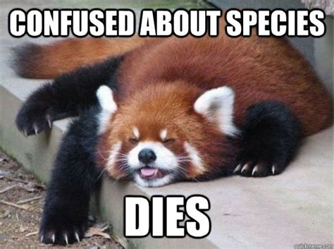 Confused Dog Meme - confused about species dies bear cat dog raccoon quickmeme