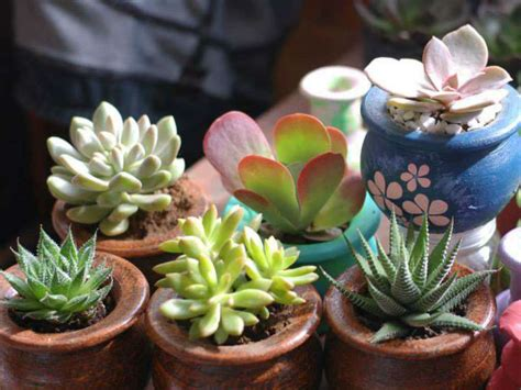 easy tips    grow succulents world  succulents