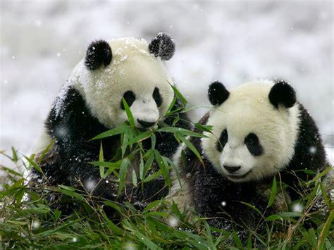 imagenes invierno wasap fonditos soportando el invierno animales osos mascotas