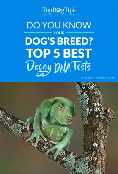 top 5 best dna tests onetimemojo