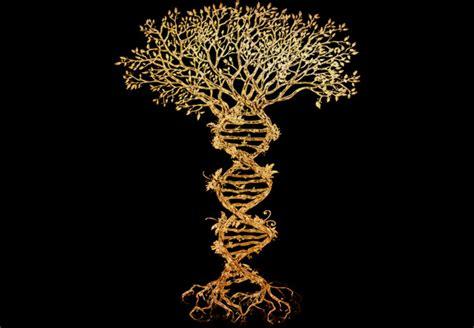 T Shirt Tree Hardrock tree t shirt designs kamos t shirt