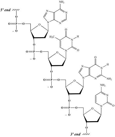 nucleic acid diagram illustrated glossary of organic chemistry nucleic acid