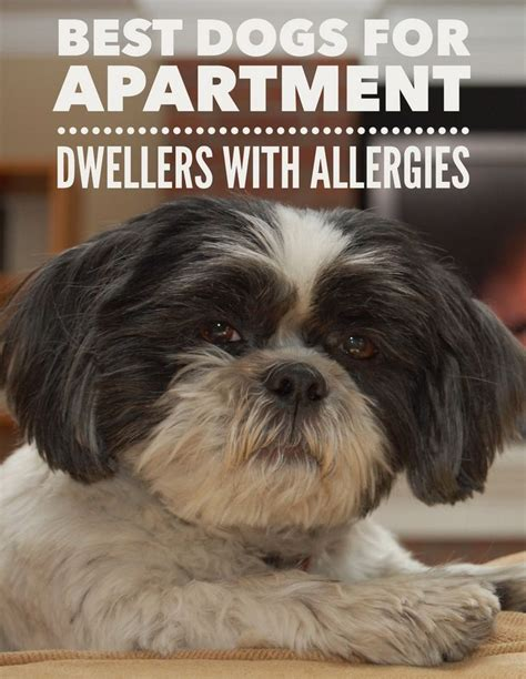 best shoo for dogs with allergies 25 best ideas about hypoallergenic breed on small hypoallergenic dogs