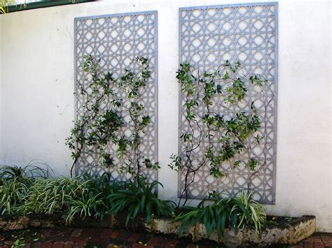 Cutout Mt Claremont Western Australia To Grow Climber On Garden Wall Australia