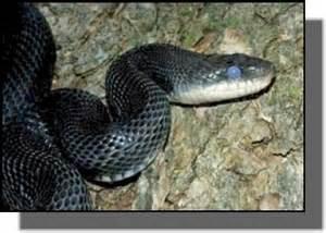 snake s burrow