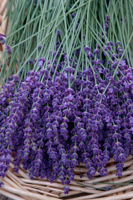 Bedroom Plants Buy Bedroom Plants What To Buy Voga