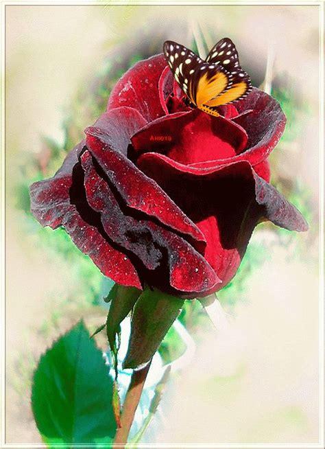 imagenes animadas bellas m 225 s de 17 ideas fant 225 sticas sobre rosas rojas en pinterest