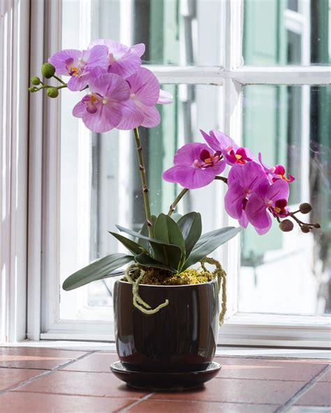 artificial cottage phalaenopsis plant natural beauty at