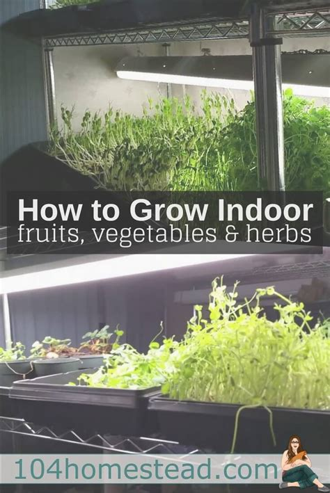 how to grow herbs indoors 100 how to grow herbs indoors growing parsley how to