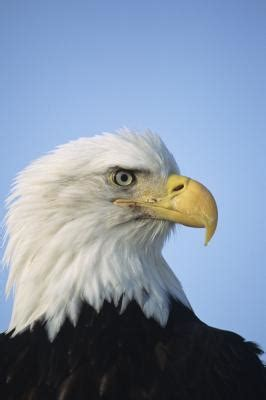 what do cracker beak birds eat classifying birds according to their beaks animals me