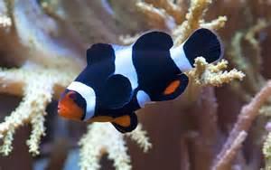 aquarium fish for sale online in india 2017   Fish Tank Maintenance