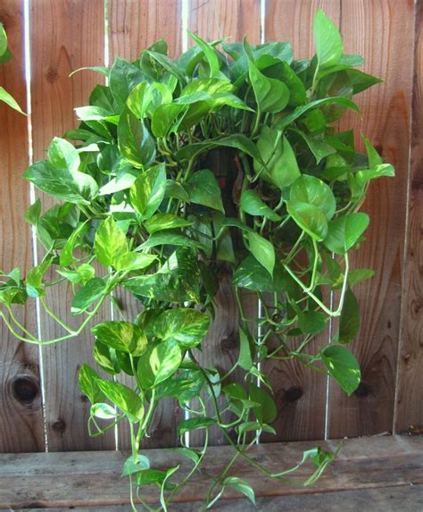 piante da tenere in casa 10 piante da tenere in casa per purificare l bigodino