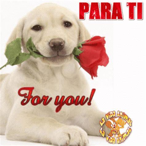 imagenes de perros animados con movimiento y frases lindos gif animados de perritos sosteniendo una flor en su