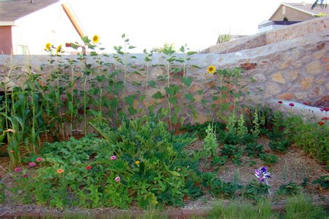 Summer Vegetable Garden by Nourished And Nurtured Tips For Planting The Summer