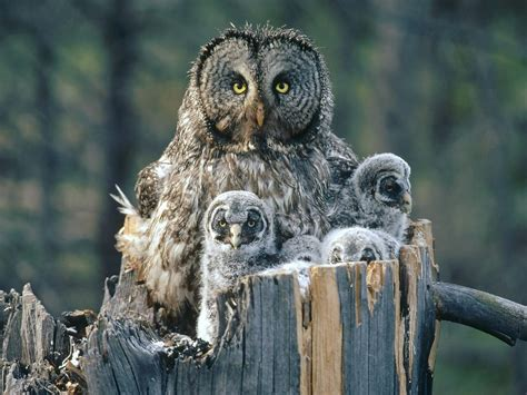 19 best images about owls on pinterest owls owl and owl family quotes quotesgram