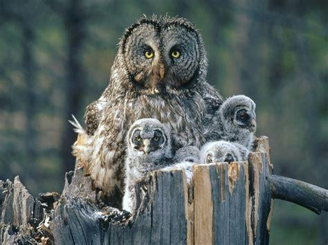 owl family quotes quotesgram