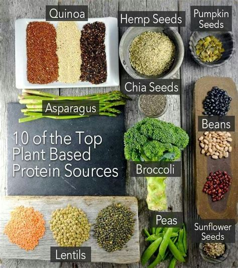 p protein in plants top 10 plant based protein sources eat like oki